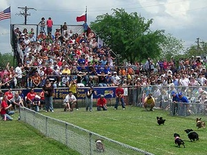 Austin Photo: Events_Wiener Dog Race_Crowds