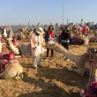 News, Shelby, Dubai camel races, February 2015