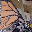 Bike zoo butterfly bicycle