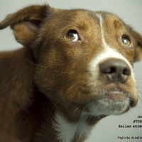 Rescue dog Ned