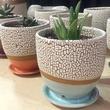 Rhyno Clayworks Ryan Lucier pottery plants