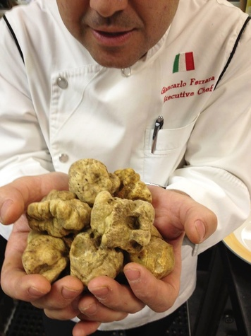 Arcodoro Houston chef Giancarlo Ferrara $2,000 worth of white truffles November 2013