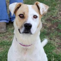 Katie Sue, SPCA Pet of the Week