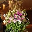 The Blooming Idea Primavera The Galleria