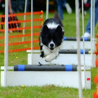 News_Peter Barnes_Flyball_Dec. 2009_training_dog