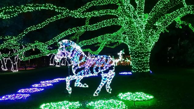 News, Shelby, Zoo Lights, Dec. 2014