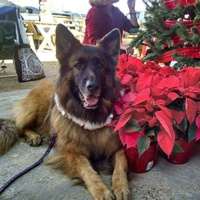 Greater Houston German Shepherd Dog Rescue presents Jingle Bell Bark and Brew