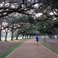 News_Run in the Park_Hermann Park_new trails