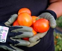 San Antonio Food Bank volunteer farm