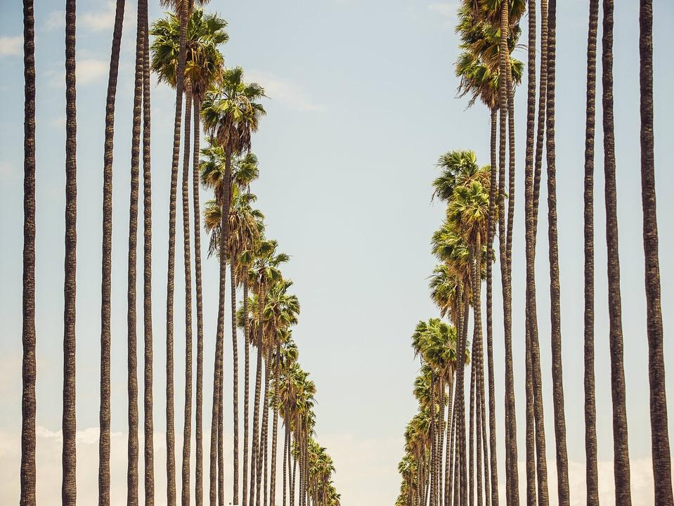 29 Palms, Steve Wrubel