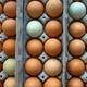 fresh farm eggs in cartons