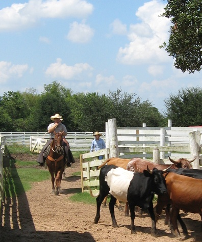 George Ranch Historical Park Horses