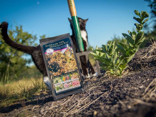 Photo of milkweed seed kit