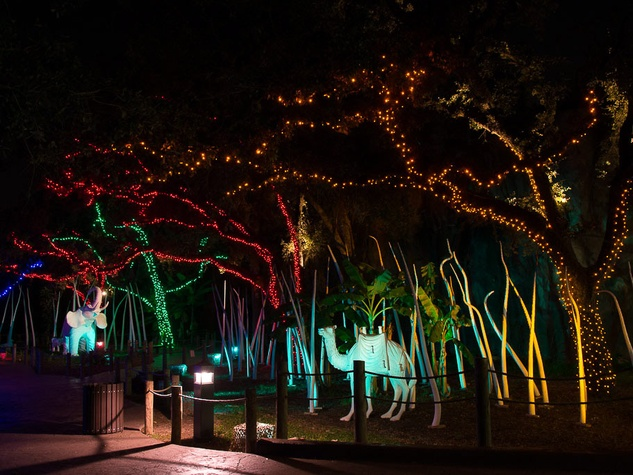 Houston Zoo holiday lights, November 2012