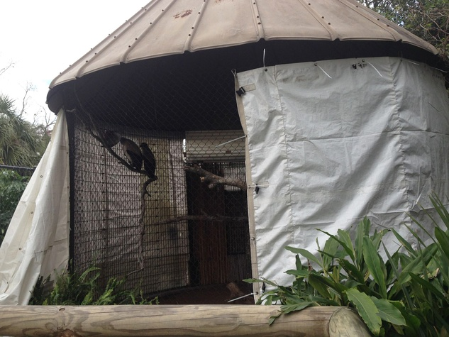Houston weather freeze Houson Zoo cage wrapped in plastic January 2015 zookeepers took extra time to make sure the animals were snug