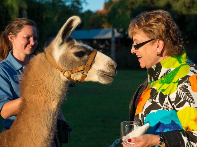 Houston Zoo Conservation Gala 2015
