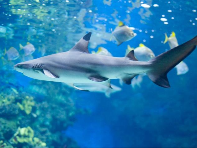 Portland Aquarium shark