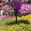 News, Shelby, Dubai Miracle Garden, January 2015