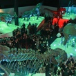 Museum of Natural Science gala, March 2013, crowd, venue, dinosaurs