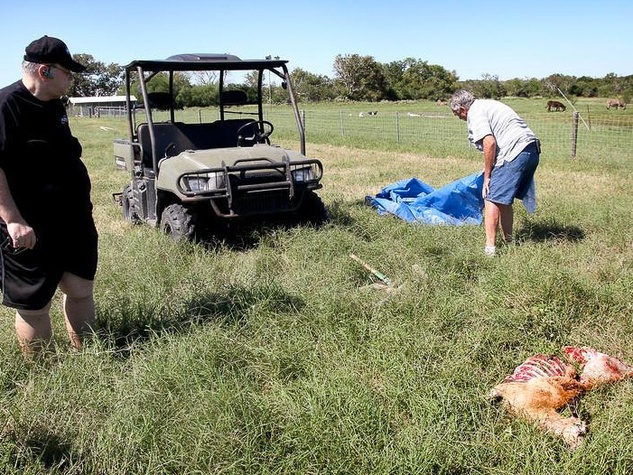 mutilated sheep near Port Lavaca October 2013