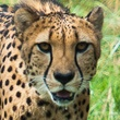 Houston Zoo's Beastly Brunch-Mardi Gras Style