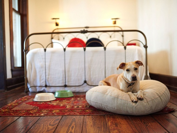 The 10 Best Texas Hotels For A Pet Friendly Vacation Culturemap San Antonio