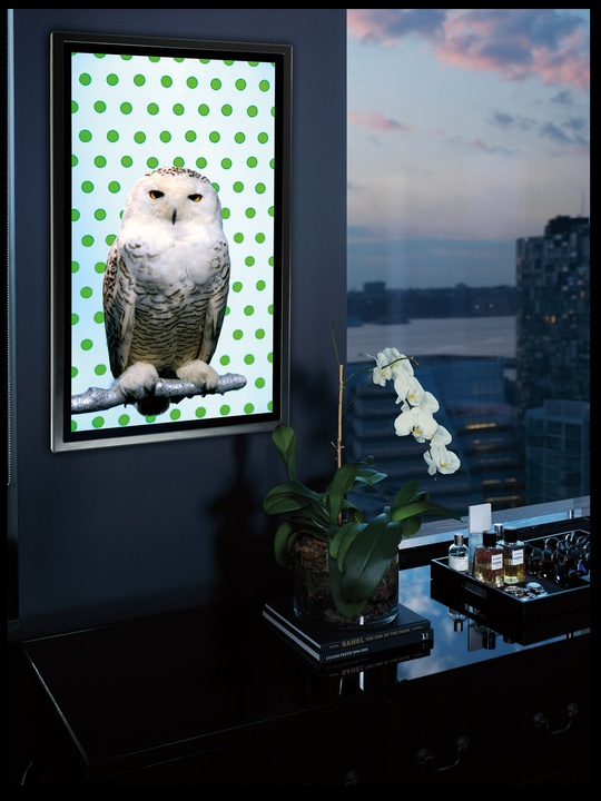 Neiman Marcus, Christmas Book, fantasy gifts, October 2012 , Snowy Owl, BLACK SPACE