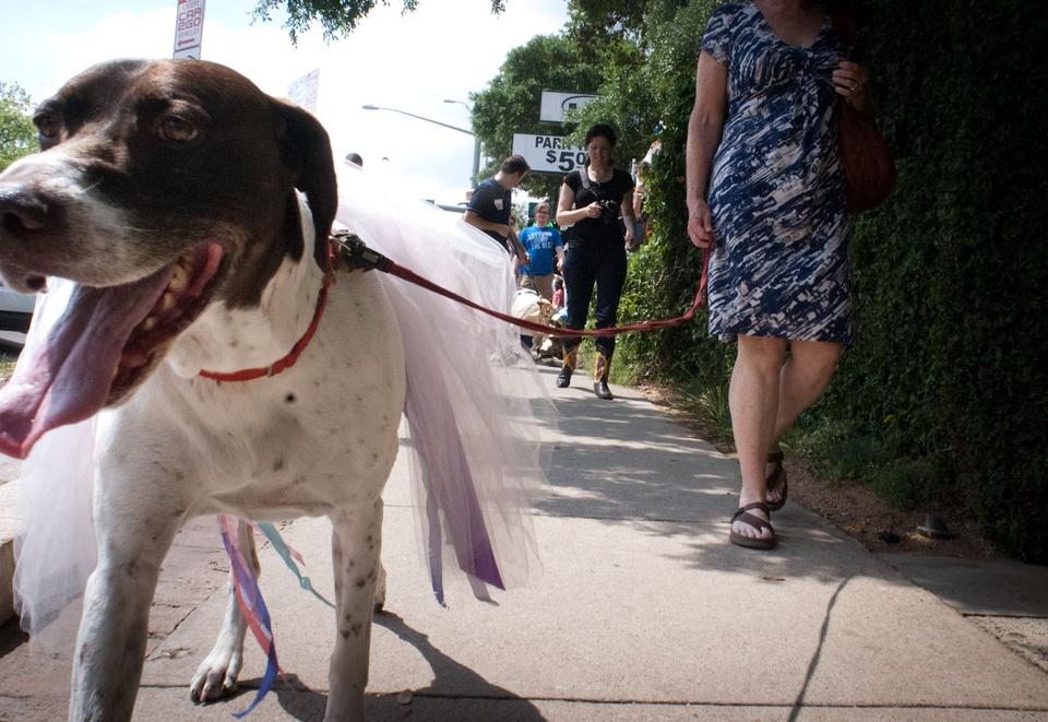 Austin Photo Set: News_Easter dog parade_april 2012_5