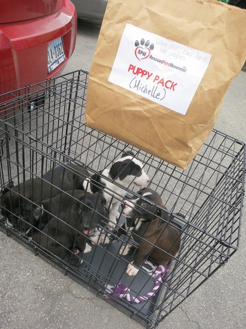 BARC Rescued Pets Movement November 2013 RPM Fosters and their travel supplies