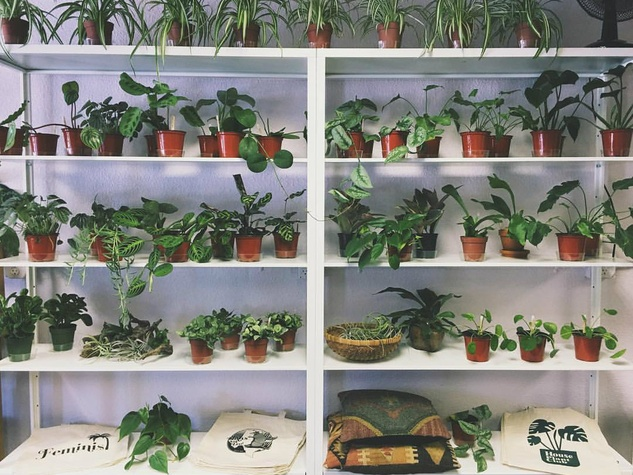 The Fox Den plants houseplants