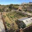 5 803 Kipling St. community garden for sale February 2015