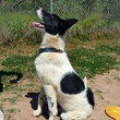 Mickey Mouse APA! pet of the week dog sitting for trainer