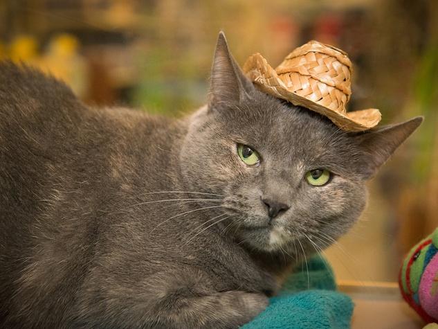 Tanya APA! cat