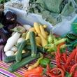 News_Sustainable Living Fest_vegetables
