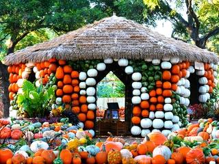 Dallas Arboretum and Botanical Garden presents Autumn at the Arboretum