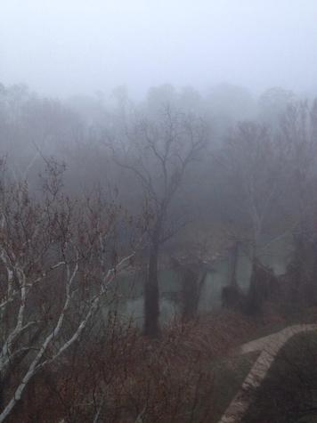 fog in Houston February 2014 eerie fog in trees