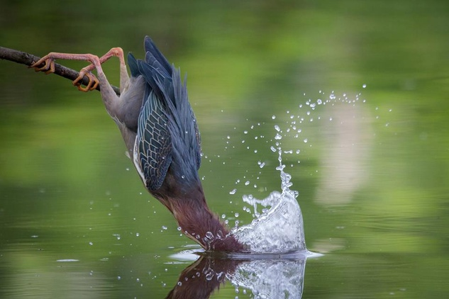 12th Annual Galveston FeatherFest Birding & Nature Photography Festival
