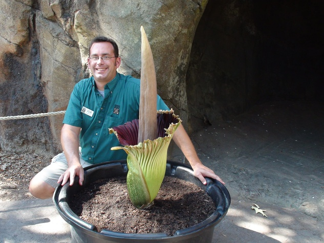 News_corpse flower_Pewtunia_Houston Zoo_Joe