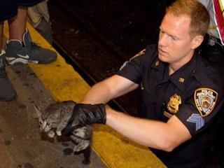 Kitten rescued on New York Subway tracks