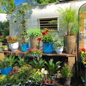 Austin 39 s best garden shops for stylish succulents and all for Best home decor austin