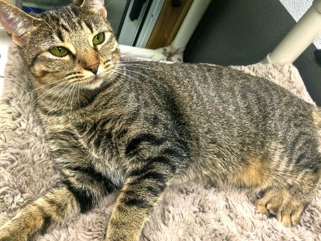 Tigris Austin Pets Alive