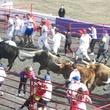 Great Bull Run 11