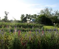 Boggy Creek Farms blooms flowers spring