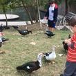 Buffalo Bayou Park kid feeding ducks