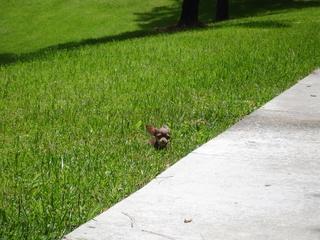 News_Lola_small dog_Houston_grass