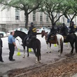 nearly every parking spot is taken by a police car or horse at Houston City Hall May 13, 2014