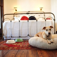 Hotel Havana dog-friendly accommodations