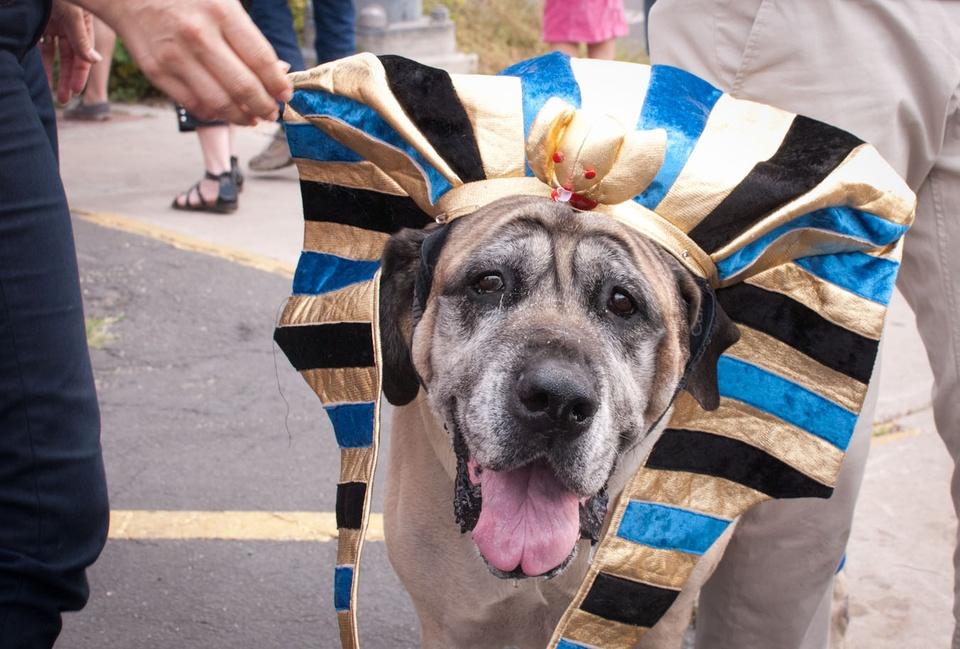 Austin Photo Set: News_Easter dog parade_april 2012_3