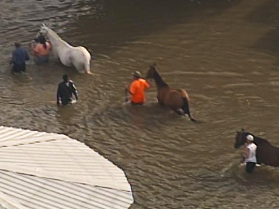rain, storm, Houston, horses, flooding