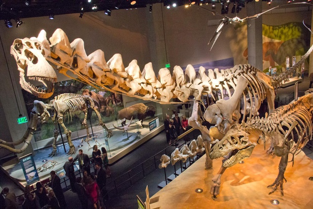 Perot Museum Of Nature And Science Holiday Hours